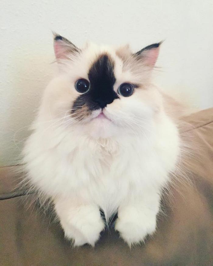 Sometimes I Pretend To Be A Munchkin Cat 🍞