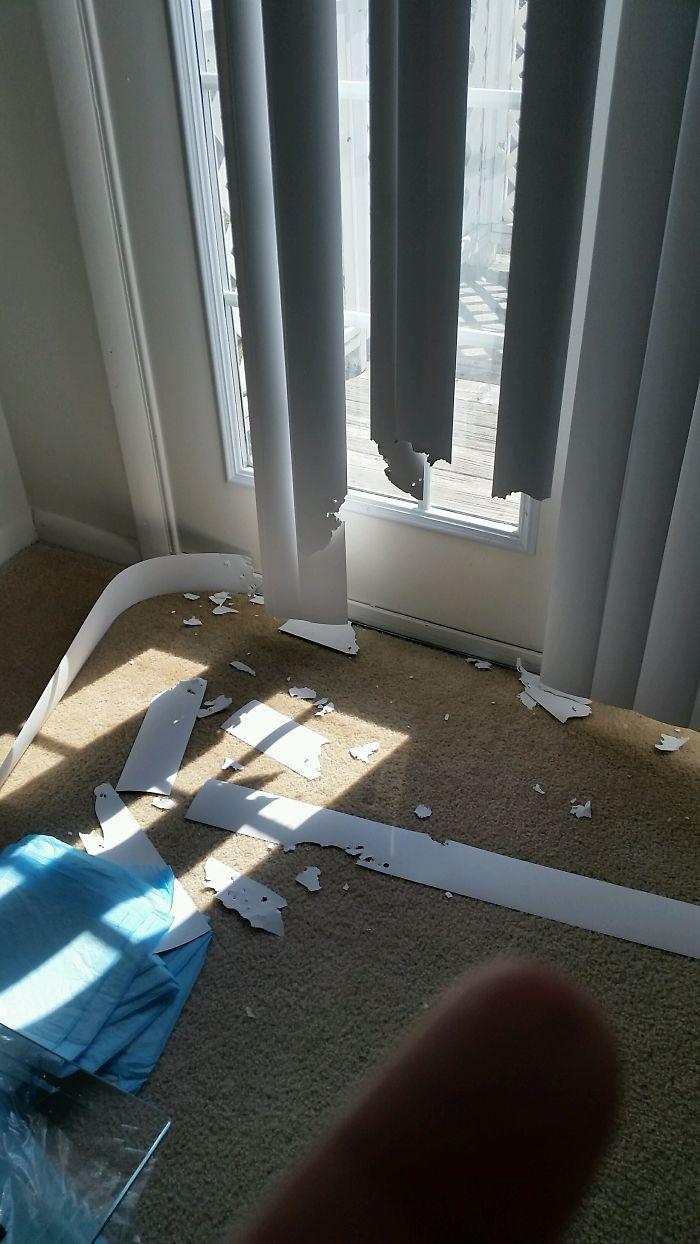 Se mantiene durante 20 minutos y no abrir las persianas para poder observar para mí .... idiota.