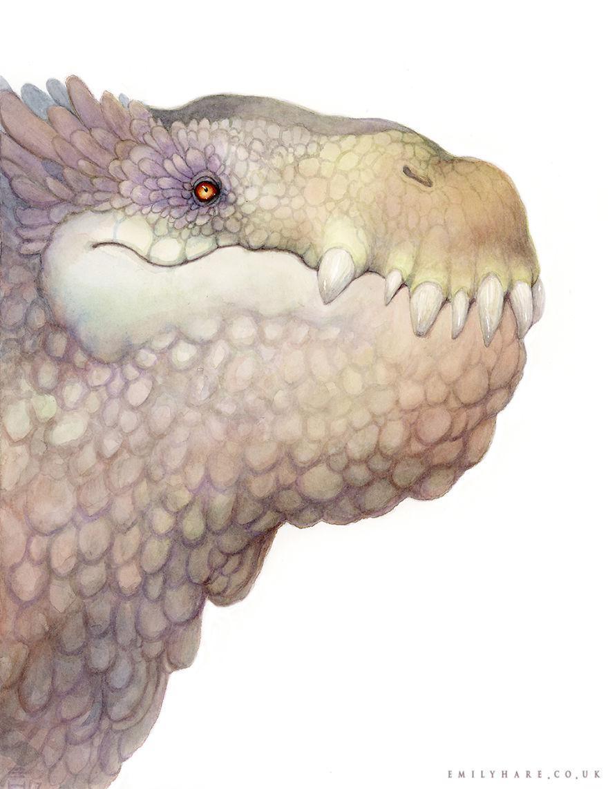 Club-nosed Dragon