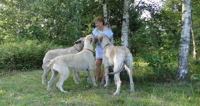 Wolfhound Summer