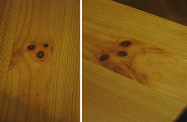 I Have Two Dogs. On My Wooden Kitchen Table
