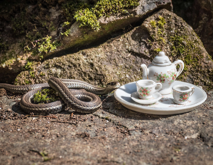 An Unusual Tea Party With My Forest Friends