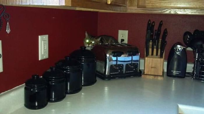 When We Got A New Puppy, The Cat Went Incognito.