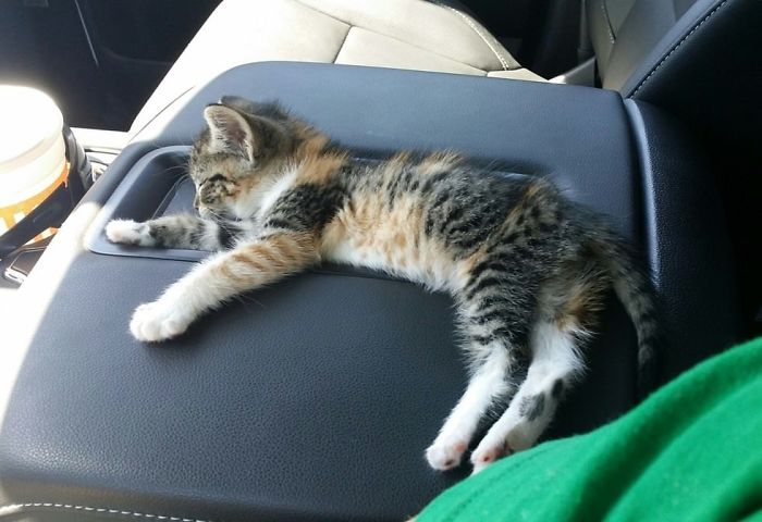 After Truck Driver Finds Stray Kitten On Road She Falls Asleep, And He Doesn't Have The Heart to Wake Her