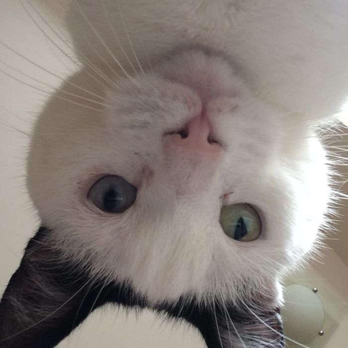 So My Cat Was Board So She Took Some Selfies? This Is What I Found On My Ipad