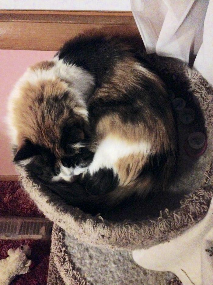 Emmy Cat