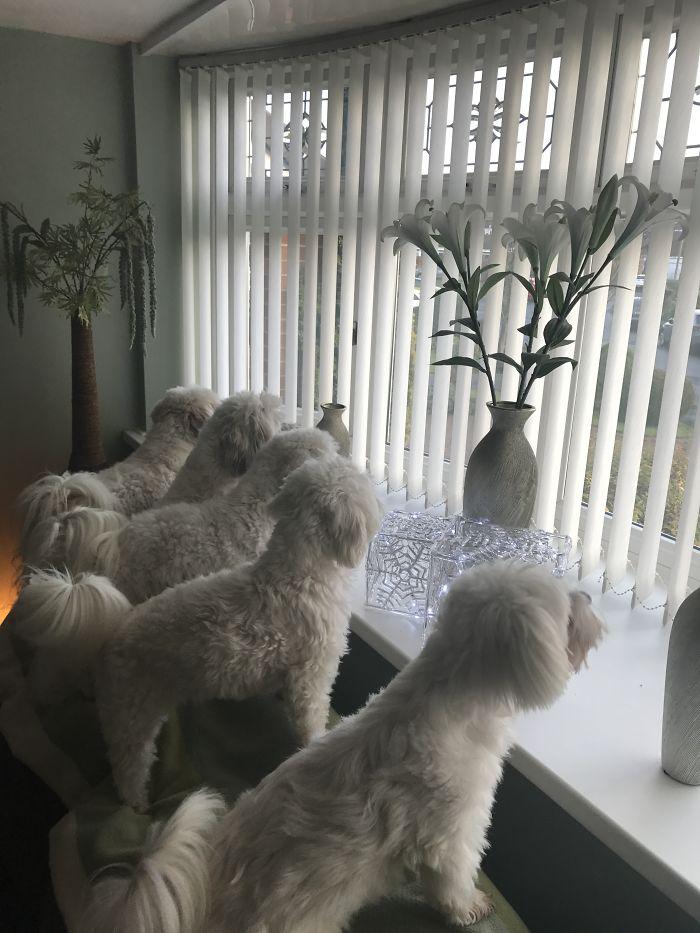 Neighbourhood Watch!