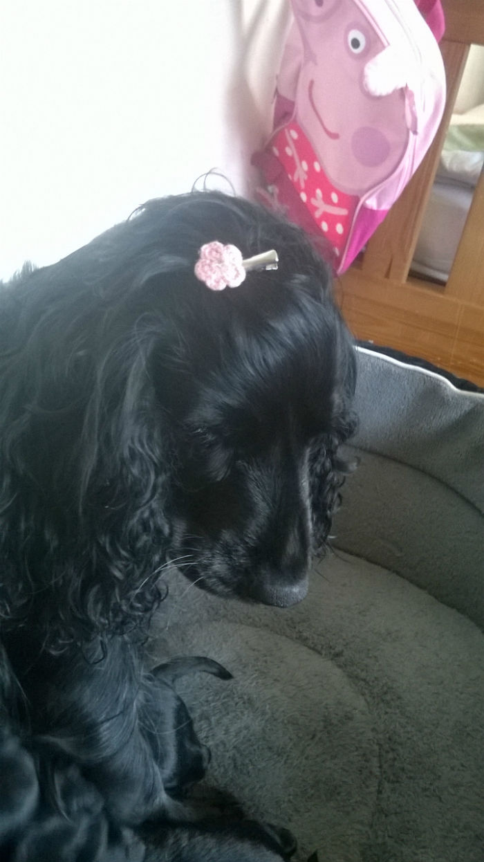 My Sister Decided To Put A Hair Clip On Bella So ' She Would Look Like A Proper Mommy'