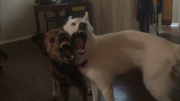 They Were Fighting And This Is The Look I Got When I Told Them To Sto.