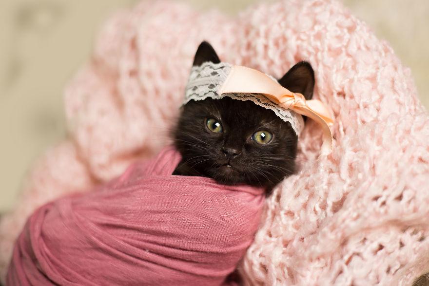 Newborn Kitten Photoshoot That I Did To Celebrate My Daughter's New Cat