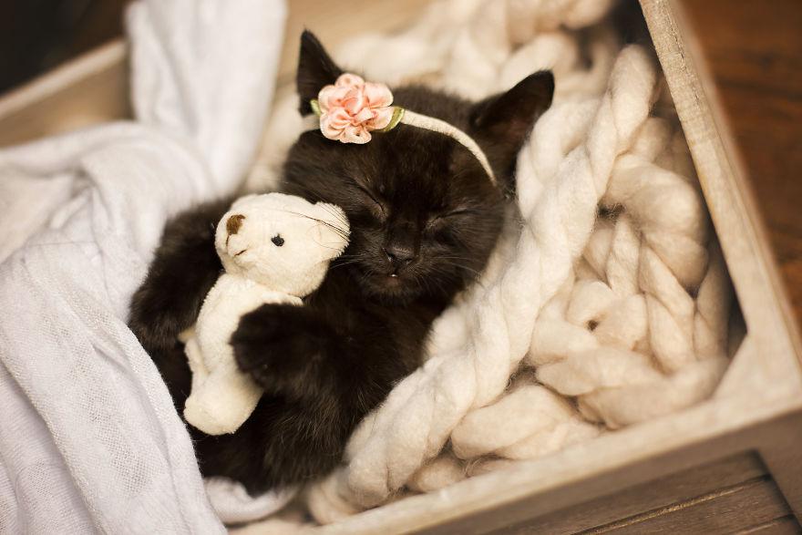 Newborn Kitten Photoshoot That I Did To Celebrate My Daughters New