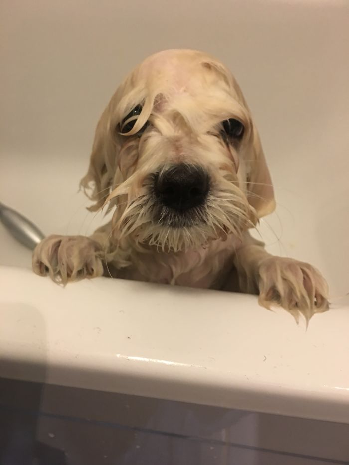 Her First Bath. I Think She Means To Kill Us.