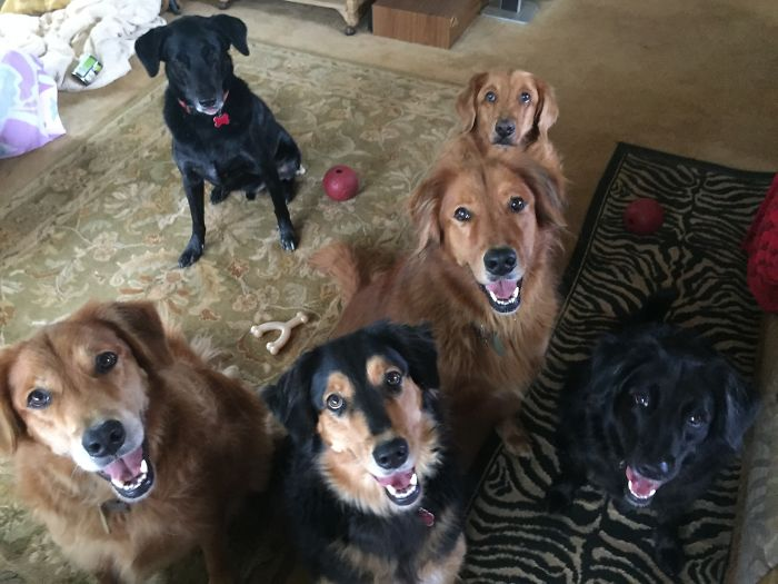 Six Out Of Seven Of My Goofballs ( Hard To Fit Them All In One Pic!
