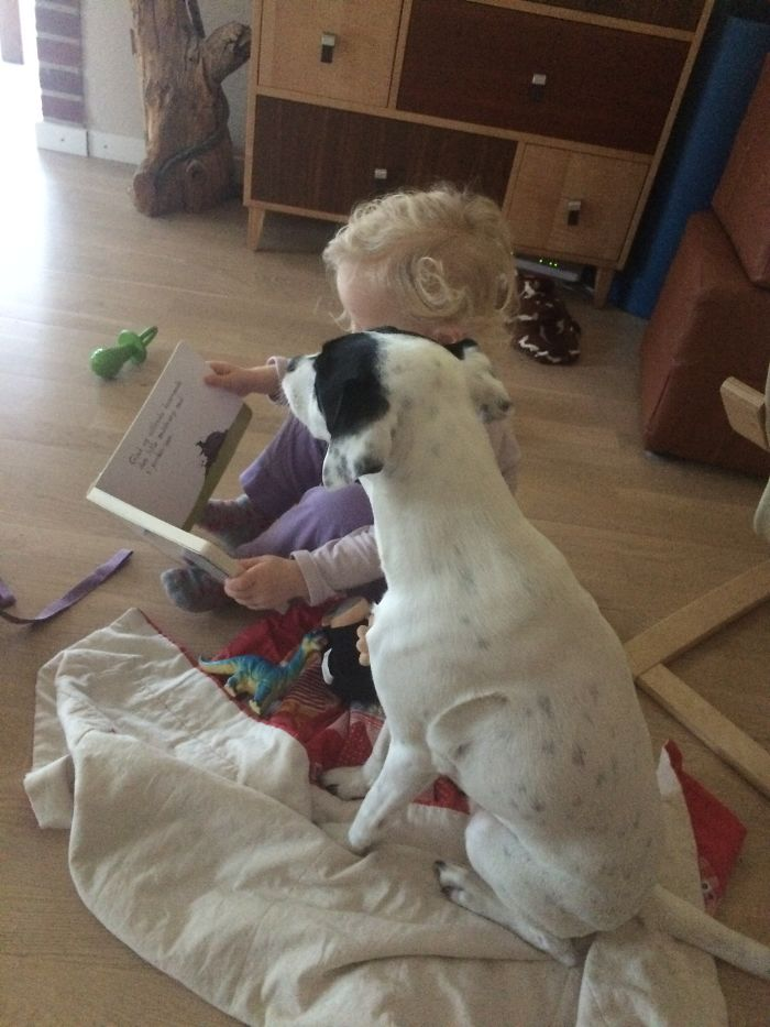 When The 2-year Old Gets The Dog To Listen To Her Reading A Story