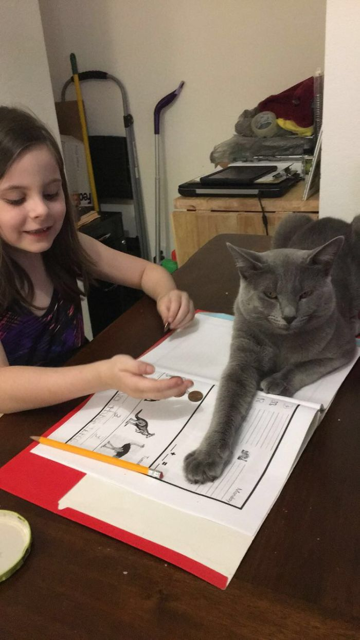 Over Dramatic Cat Doesn't Like Homework
