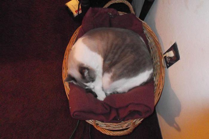 Basket O'monstie :)