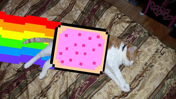 Nyan Cat Pop Tart Dreams