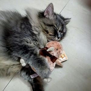 Dindim Dreaming About Mabel