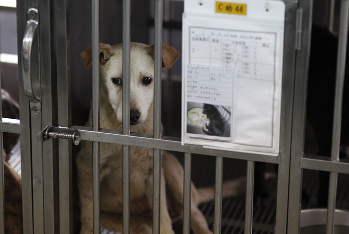 Taiwan-bans-eating-dogs-cats-meat-1
