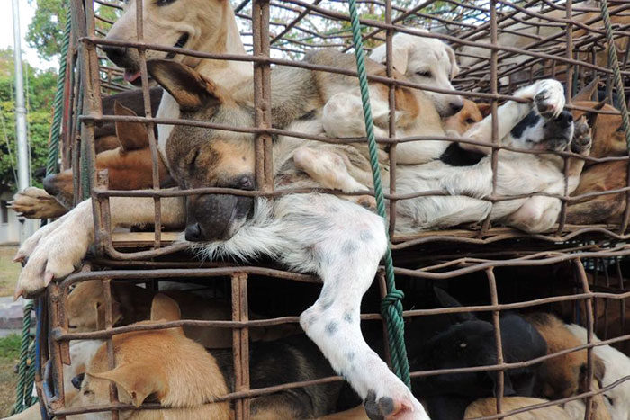 Taiwan-bans-eating-dogs-cats-meat-11