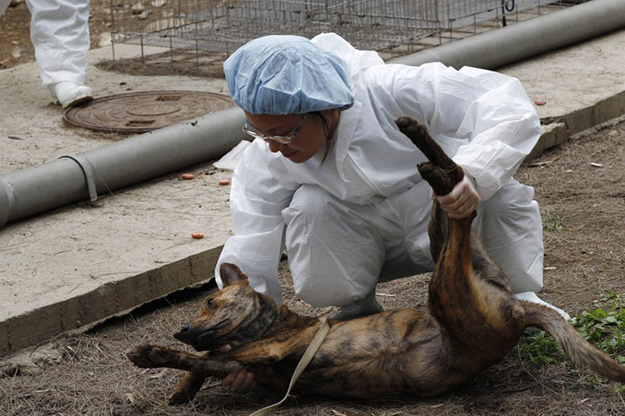 Taiwan-bans-eating-dogs-cats-meat-2