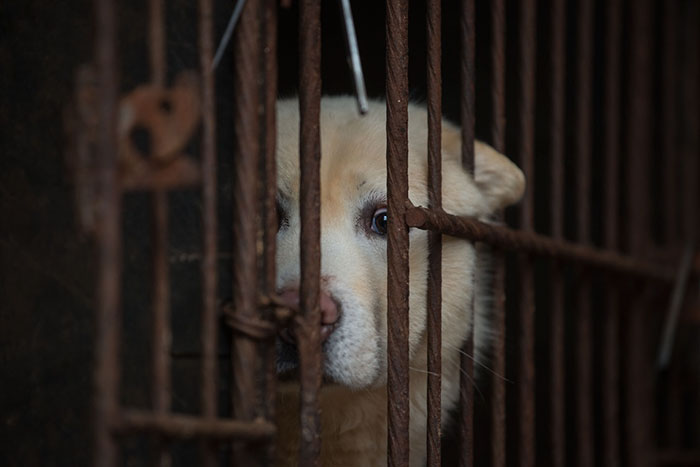 Taiwan-bans-eating-dogs-cats-meat-4