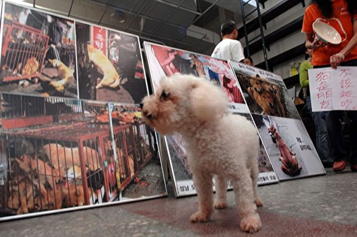 Taiwan-bans-eating-dogs-cats-meat-7