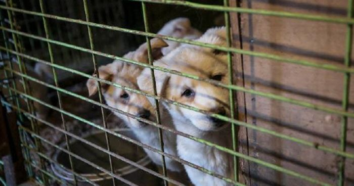 ban on eating cats and dogs Taiwan has banned the sale and consumption of cat and dog meat, a departure  from a controversial practice that is common among its asian.