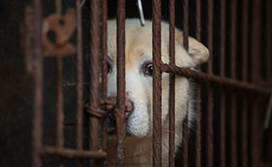 Taiwan Has Just Become The First Asian Country To Ban Eating Cats And Dogs