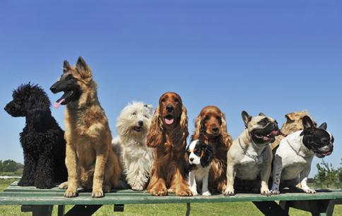Top_10_Dogs_4574_206957133-58e1752e2cd3c.png