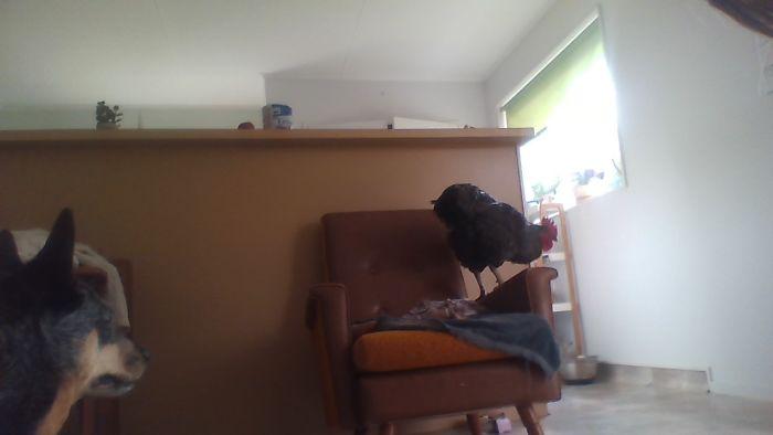 Mum Its My Chair