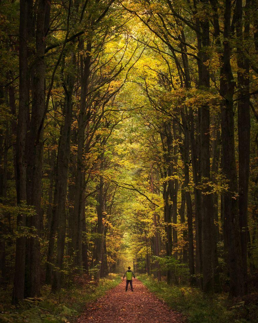 "Autumn In ""Dąbrowa W Niżankowicach"" Nature Reserve"