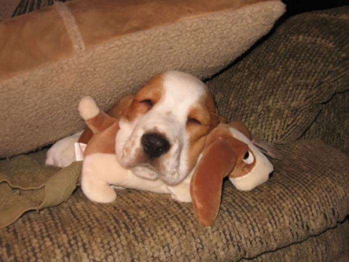 Duerme con una versión pequeñita de si mismo