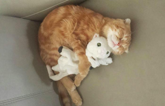 My Kitten's Gotten Himself A Cuddle Buddy