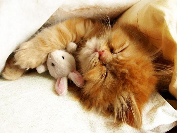 Cuddling His Little Friend
