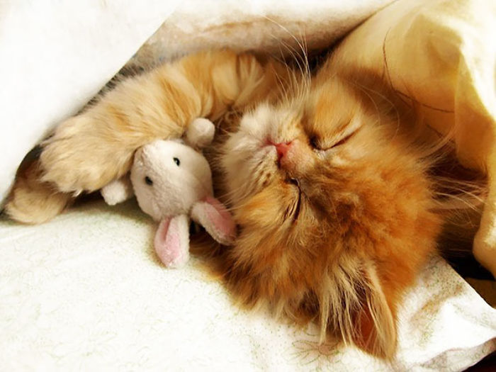 Cuddling His Little Friend