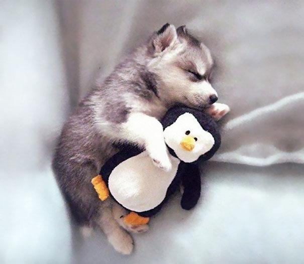 Little Puppies Take Little Puppy Naps