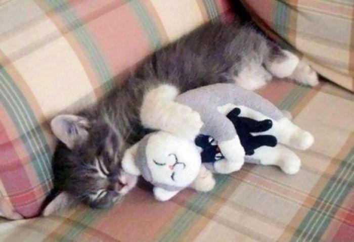 Gato + gato + gato