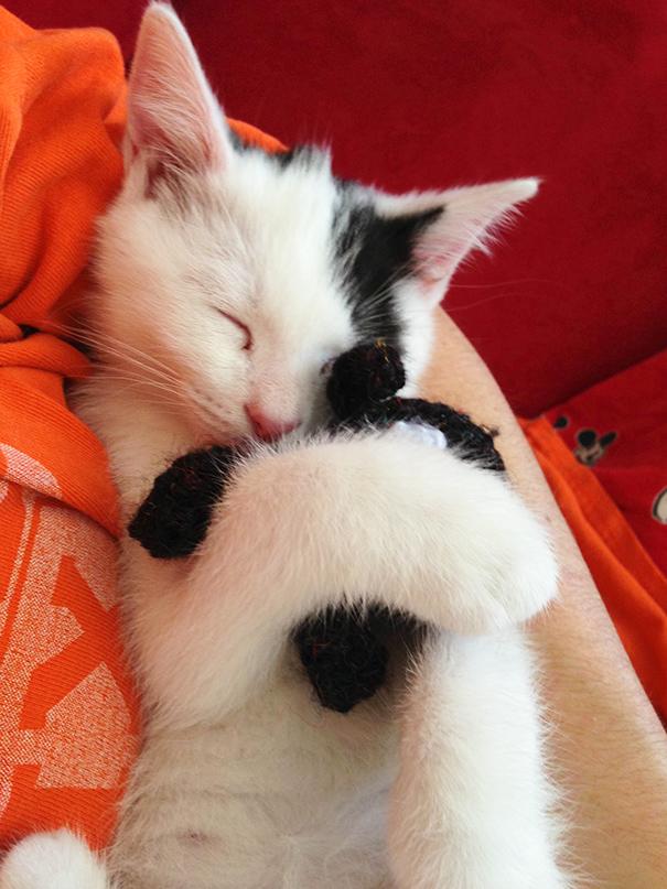 My Kitten Fell Asleep Hugging His Favourite Stuffed Animal