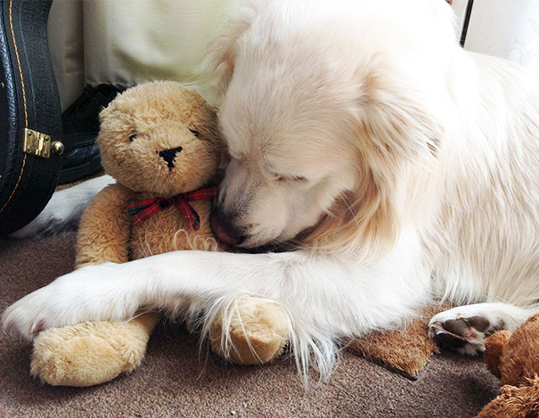His Bear Is Very Important To Him