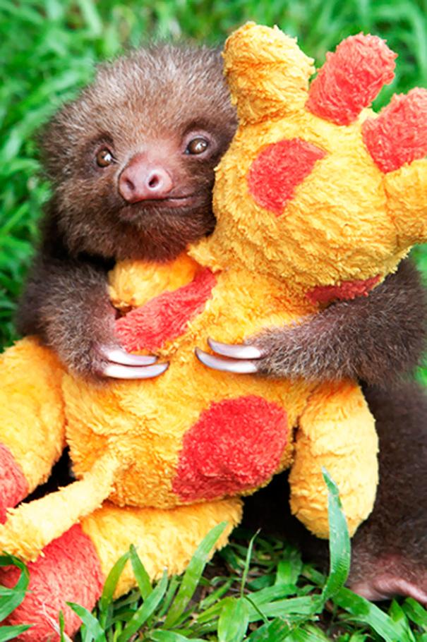 Baby Sloth And His Giraffe