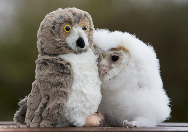 Orphaned Chick Orbit And His Toy Playmate