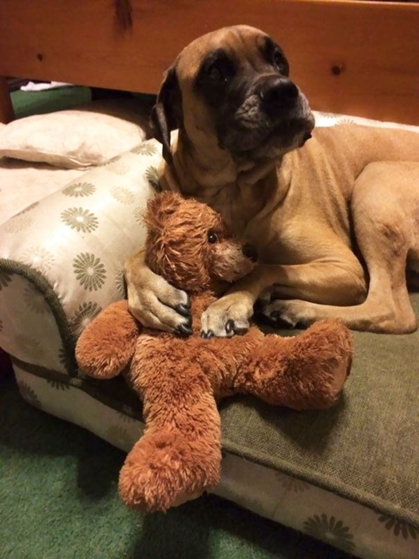 He Cuddles With His Bear So He Can Sleep. He Sucks On It's Head Like A Pacifier. What A Tough Guy