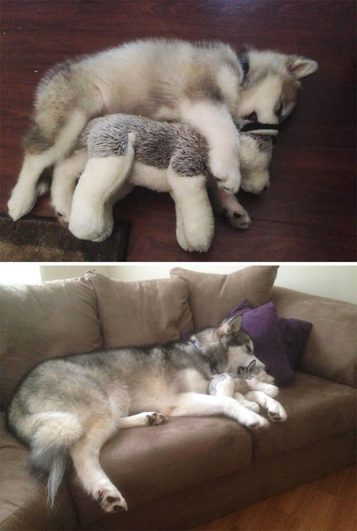 Then And Now. She Destroys Every Stuffed Animal Except This One