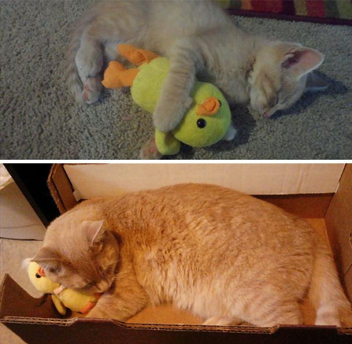 18 meses después aún duerme con su patito