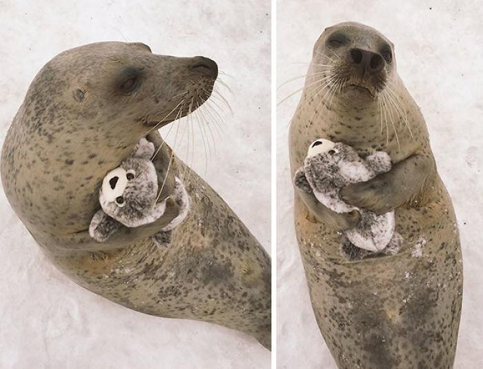 Le regalaron este peluche y no deja de abrazarlo