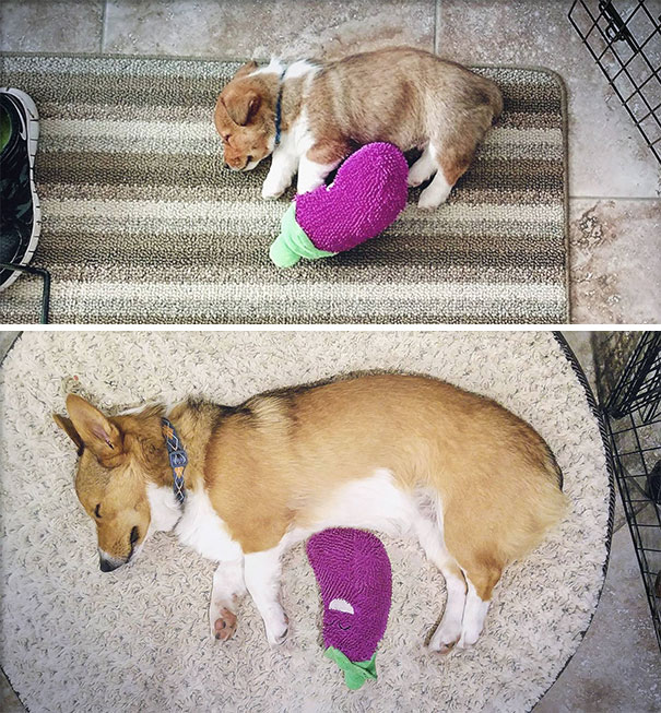 Winston Turns 1 Today. He Still Sleeps With The Same Toy