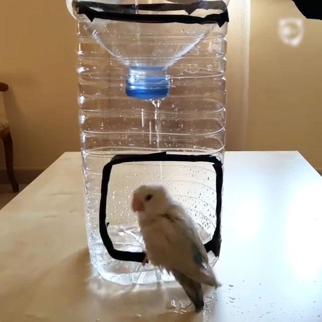 How To Make A Bird Shower Bored Panda