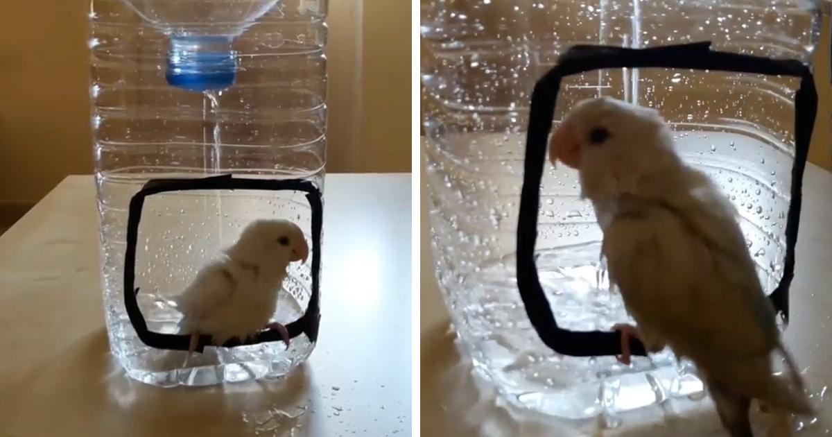How To Make A Bird Shower