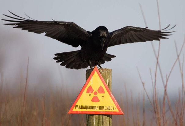 Raven Don't Care